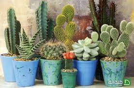 نمایشگاه گل و گیاه باران