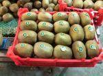 صادرات میوه کیوی به روسیه
