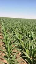 املاک کشاورزی