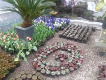 نهال فروشی و گل فروشی گلستان سیدالشهدا