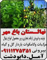 نهالستان باغ مهر
