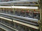 فروش قفس بلدرچین تخمگذار-قفس بلدرچین-قفس بلدرچین گوشتی